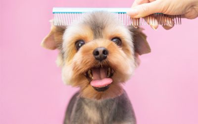 3 Health Benefits of Professional Dog Grooming