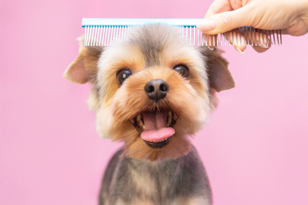 health benefits of professional grooming