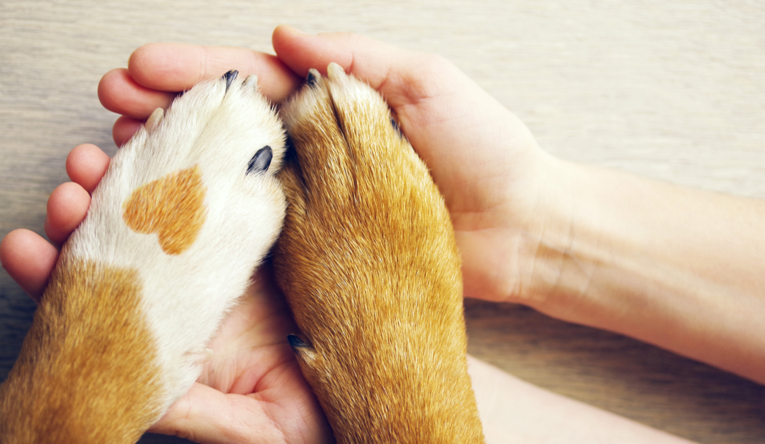 How To Keep Your Cat or Dog in the Best Health